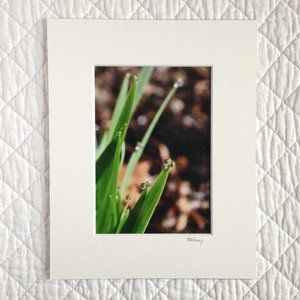 """Iris Leaves with Raindrops"" 5x7 Photography Print"
